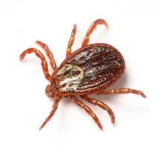 ticks burrow underground over the winter