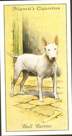DOG Bull Terrier, Small British Trading Card 1936