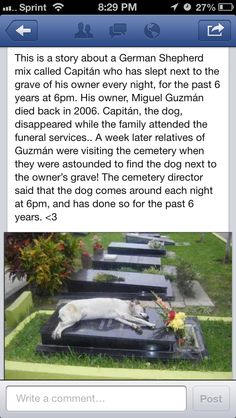Touching story~ Dogs are the most loyal souls of all, this is heartwarming and so sad.
