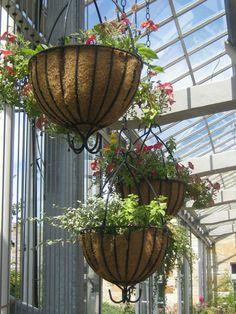 plantas colgantes de interior - Buscar con Google