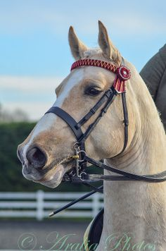palomino stallion with such gentle eyes that reminds me of my lab : )