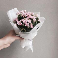 주문 레슨문의 Katalk ID vanessflower52 #vanessflower #vaness #flower #florist #flowershop #handtied #flowergram #flowerlesson #flowerclass #바네스 #플라워 #바네스플라워 #플라워카페 #플로리스트 #꽃다발 # #부케 #원데이클래스 #플로리스트학원 #화훼장식기능사 #플라워레슨 #플라워아카데미 #꽃스타그램 . . . #미니다발 #부바르디아 . . 귀욤진 부바르디아 미니다발
