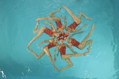 View top-quality stock photos of Synchronized Swim Team Practicing. Find premium, high-resolution stock photography at Getty Images. Swimming Photos, Spring Spa, Synchronized Swimming, Swim Team, Super Happy, Vintage Glamour, Great Photos, Underwater, Poses