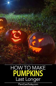 How To Preserve A Carved Pumpkin From Rotting Ways] How to preserve a pumpkin from rotting, carved and uncarved. We share what steps to take and make the pumpkin last longer. Tips and Ways] How To Make Pumpkin, A Pumpkin, Pumpkin Carving, Preserve Carved Pumpkin, Halloween Pumpkins, Halloween Fun, Preserving Pumpkins, Organic Gardening Tips, Great Life