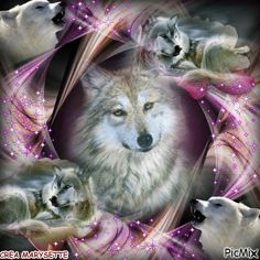 The love on you face when you dream of your loved ones who have passed. Wolf Images, Wolf Photos, Wolf Pictures, Beautiful Wolves, Animals Beautiful, Indian Wolf, Native American Wolf, Wolf Husky, Wolves And Women