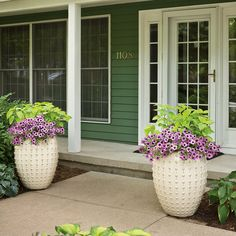 The height of ColorBlaze Lime Time coleus leaves plenty of room for Supertunia Bordeaux to grow and trail over the sides of these modern containers. The plants are truly the focal point here with the monotone appearance of the home's trim and containers.