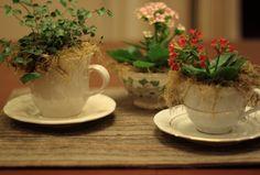 How cute! I wish I could keep plants alive...