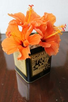 Orange hibiscus .. simple...
