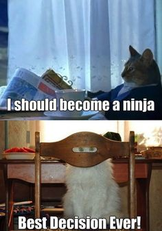 2014 MEME I Should Become A MEME I Should Become A Ninja. get more funny i should become a ninja cat memes and lol pics 2014 Funny Pictures With Captions, Picture Captions, Funny Photos, Funny Captions, I Love Cats, Crazy Cats, Cute Cats, Funny Animals, Cute Animals