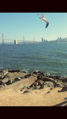 Caught a bird in action + background of the city and Bay Bridge.