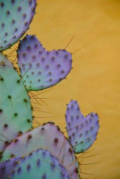Top Creative DIY Cactus Planters Ideas You Should Copy Right Now no 23 (succulents background) Heart In Nature, Agaves, Cactus Y Suculentas, Cacti And Succulents, Cactus Planters, Cactus Garden Ideas, Indoor Cactus, Cactus Cactus, Desert Cactus