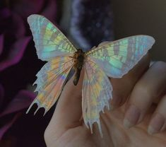 Butterflies and Moths have wings that are covered with millions of microscopic dust-like scales. By removing these scales I have revealed the iridescent membrane of this Sunset Moth's wing.