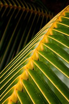 Palm Abstract by Michael Anderson.................d
