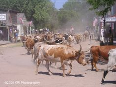 old cattle drives | cattle drive 1 1