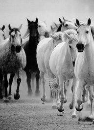 horseees