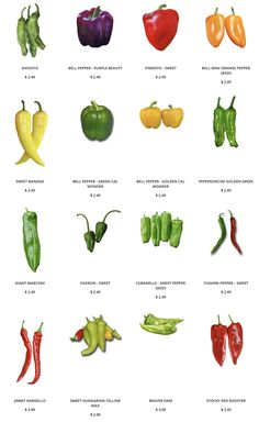 Sweet Pepper Seeds - Our collection of Sweet Peppers include: Shishito, Giant Marconi, Padrón , Jimmy Nardello, Beaver - Sweet Banana Peppers, Stuffed Banana Peppers, Stuffed Pepper Soup, Stuffed Sweet Peppers, Freezing Bell Peppers, Growing Bell Peppers, Marconi Pepper Recipe, Bell Pepper Soup, Types Of Peppers