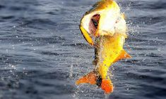 23 Ideas De Tablas Solunares Tablas Zonas Horarias Pesca
