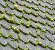 Черепичная крыша с мхом