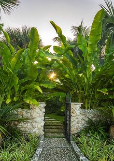 Tropical Backyard Landscaping, Tropical Garden Design, Modern Landscaping, Hawaii Landscape, Pool Landscape Design, Back Gardens, Garden Inspiration, Beautiful Gardens, Absolutely Gorgeous