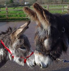 Donkeys! <3