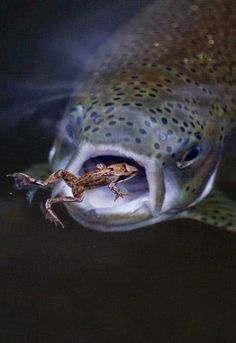 Too Cool. Some days fishing we feel like the frog. Some days we are the Trout.