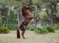 Horsealot photographie • Horsealot Tilda Josefsson