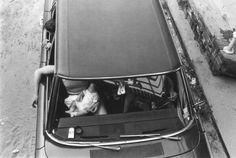 O luxo e o lixo em preto e branco - Arlene Gottfried