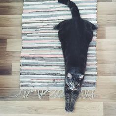 Looks like this #jyskpet likes our comfortable JURA #mat (@anna_ltv ). Show us your pet photos by using #Jyskpet  #Jysk #pet #cat