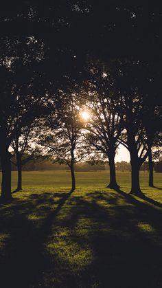 Hagley Park, New Zealand Stuff To Do, Things To Do, Kiwi, New Zealand, Sunset, Park, Fun, Outdoor, Beautiful