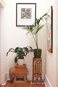 Rattan and plants