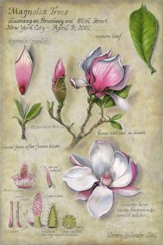 Collection of botanical illustrations of flowers by Wendy Hollender.