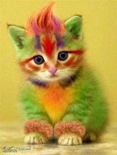 Rainbow Coloured Animals Pets are great, and as a pet owner, you'd want them to look their best. To achieve that, some pet owners dye their pet's fur. Today we feature some rainbow-dyed pets! Baby Animals, Funny Animals, Cute Animals, Colorful Animals, Cute Kittens, Cats And Kittens, Crazy Cat Lady, Crazy Cats, Tier Fotos