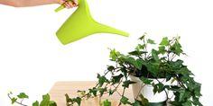 14 rostlin do kanceláře, které prospějí vašemu zdraví
