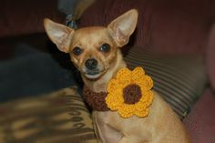 Shell Stich Dog Collar with Big Flower