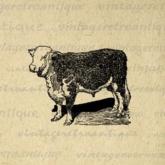 Printable digital cow calf graphic. This high resolution illustrated cow digital illustration is great for fabric transfers, making prints, and many other uses.