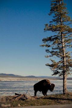 lake yellowstone-6 by Camels & Chocolate, via Flickr