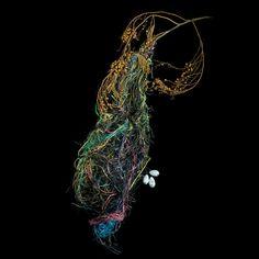 Altimira-Oriole-Sharon-Beals. The Art of the Bird's Nest