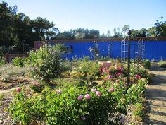 Les Jardins de la Quinta das Mil Flores: Die schwarzen dreiflügeligen Obelisken und die Laube von Classic Garden Elements im Rosengarten sehen grossartig aus vor der im Blau gestrichenen Mauer. Manche erst vor Kurzem gepflanzten Rosen blühen bereits. Das Bild verdanken wir Annabelle de La Panouse.