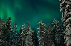 Aurora Borealis, Northern Lights. Levi, Lapland, Finland. http://www.finnishtravelblog.com/northern-lights/