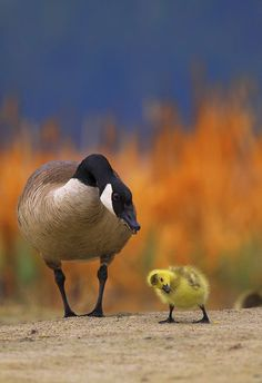 THE CONVERSATION Photo by kadek susanto -- National Geographic Your Shot