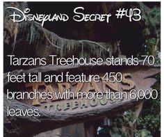 Disney Disney World Trip, Disney Disney, Disney Stuff, Disney Vacations, Disney Love, Disney Magic, Disney Park Secrets, Disneyland Secrets, Disneyland Resort