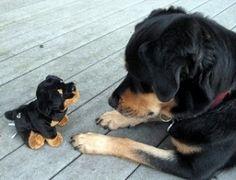 Puppy? by Kasumi