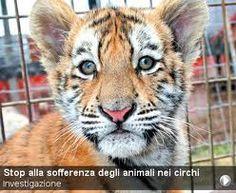 Risultati immagini per animali