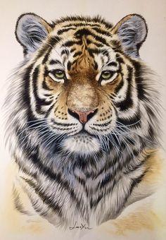 """《虎肖像》/许宁 """"Tiger Portrait """"painted by Jane Xu Chinese Artist/ Water Color Art Tiger Artwork, Tiger Painting, Big Cats Art, Cat Art, Majestic Animals, Animals Beautiful, Animal Sketches, Animal Drawings, Tiger Spirit Animal"""