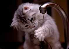 Kitten and Faucet