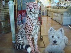 Leopard and Westie