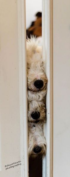 Dogs are wonderfully nosey <3 I #ForTheLoveOfDog