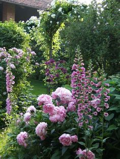 .Love foxgloves -  I like this  photo because my fox-gloves grow next to my peonies just like the photo