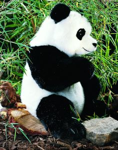 """Shaanxi"" Panda Bear"