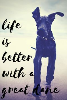 See more at https://mypupboutique.com/collections/great-dane  #GreatDane